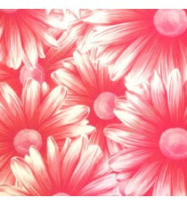 Awesome big beautiful flower looks like real 3D pattern pink cream beige combination color of daisy flower wallpaper